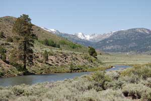 The best fishing around sonora pass for Walker river fishing