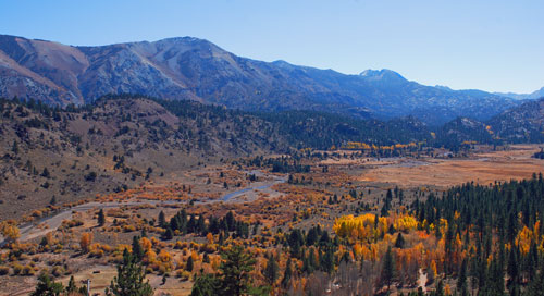 aspen trees in fall colors at Leavitt Meadow on Sonora Pass