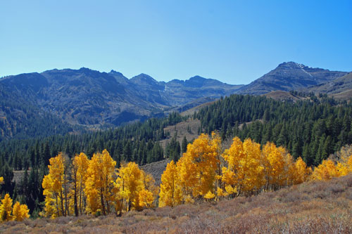 Sonora Pass Fall Color